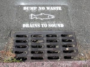 Storm Drain Cover